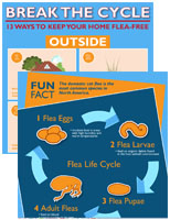 break the cycle infographic